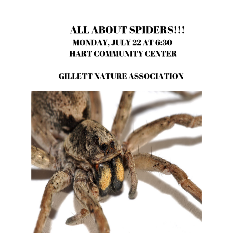 ALLABOUTSPIDERS.png